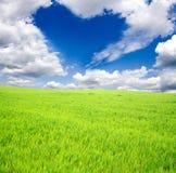 Grüner Feld- und Sonnehimmel Stockfotografie