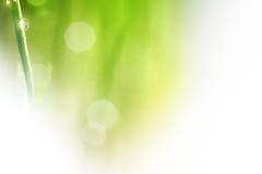 Grüner Hintergrund der Natur Stockbilder