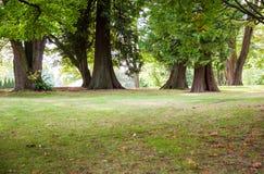 Grüner Rasen mit Bäumen im Park Stockfotografie