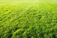 Grüner Rasenflächehintergrund, Beschaffenheit, Muster Stockfotografie