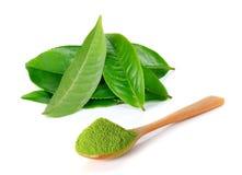 Grüner Tee des Pulvers und Grünteeblatt Lizenzfreies Stockfoto