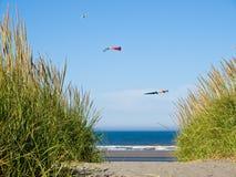 Grüner und gelber Strandhafer mit Drachen Stockfotografie