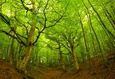 Grüner Wald Lizenzfreies Stockfoto