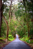 Grüner Wald in Australien Lizenzfreies Stockfoto