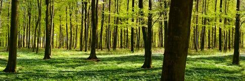 Grüner Wald im Frühjahr Stockfotografie