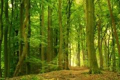 Grüner Wald am Sommer Lizenzfreie Stockfotografie