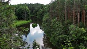 Grüner Wald und Fluss Stockfoto