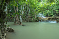 Grüner Wasserfall im tiefen Wald, Erawan-Wasserfall lokalisierte Kanchan Stockbild