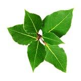 Grüner Zweig Stockbild