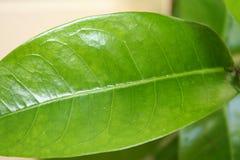 Grünes Blatt Stockfoto