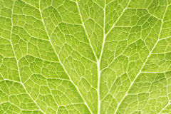 Grünes Blatt als Hintergrund Stockbilder