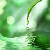 Grünes Blatt mit Tropfen des Wassers Stockfotografie