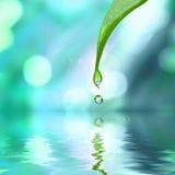 Grünes Blatt mit Wassertropfenwasser Lizenzfreie Stockfotos