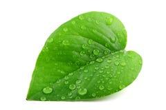 Grünes Blatt mit Wassertröpfchen Lizenzfreie Stockbilder