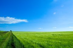 Grünes Feld 6 Lizenzfreie Stockfotografie