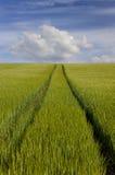 Grünes Feld-blauer Himmel Lizenzfreies Stockbild
