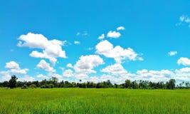 Grünes Feld blauer Himmel-Umwelt-Unendlichkeits-Konzept Stockbild