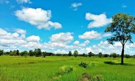 Grünes Feld blauer Himmel-Umwelt-Unendlichkeits-Konzept Lizenzfreie Stockbilder