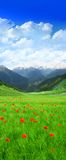 Grünes Feld im Berg Stockfotografie