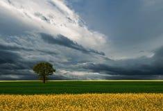 Grünes Feld mit Baum und Blumen auf dem Hintergrund der Wolken Stockfotografie