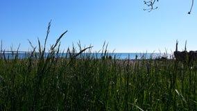 Grünes Frühlingsgras auf dem Strand von Schwarzem Meer Lizenzfreies Stockfoto