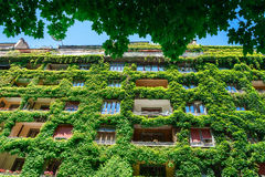 Grünes Gebäude bedeckte Efeu Stockfotografie