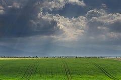 Grünes Getreidefeld und stürmischer Himmel Stockfotografie