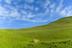Grünes Gras-blauer Himmel Stockbilder
