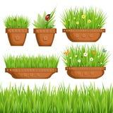Grünes Gras in den Töpfen Stockfoto