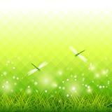 Grünes Gras-Libellen-Jahreszeit-Hintergrund-Vektor Stockfotos