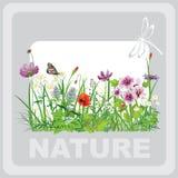 Grünes Gras und Blumen Stockbild