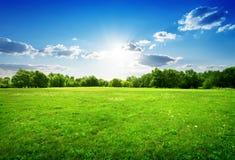 Grünes Gras und Bäume Stockbild