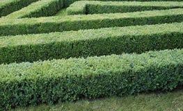 Grünes Labyrinth von getrimmten Buchsbaumbüschen Stockfotos