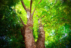 Grünes Laub im Holz Stockfotos