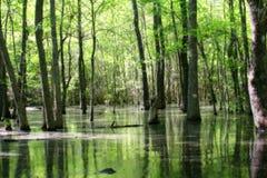 Grünes Sumpfland Stockbild