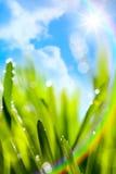 Grünhintergrund des natürlichen Frühlinges der abstrakten Kunst mit Regenbogen Lizenzfreies Stockbild