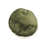 Grönkål och mörker - grön rund vattenfärgborsteslaglängd som isoleras på vit bakgrund Akvarellfläcktextur Olivgrön gråbrun färgci Arkivfoto