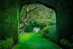 Grünpflanzebögen im englischen Landschaftsgarten Stockfotografie