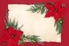 Gräns för julstjärnablommabakgrund Fotografering för Bildbyråer