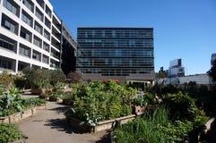 Grönsaker växer i gemenskapträdgård Royaltyfria Foton