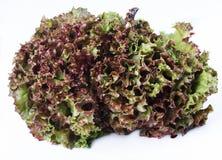 Grönsallat som är röd Royaltyfria Bilder