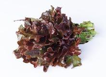 Grönsallat som är röd Royaltyfri Fotografi