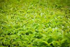 grönska Arkivbild