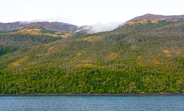 Grönskande kust- skog Arkivbild