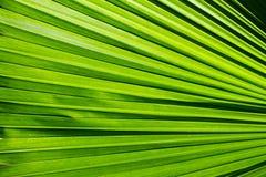 Grönt blad Arkivbild