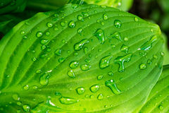 Grönt blad med droppar av vatten i slut för solskentexturbakgrund upp Arkivbilder