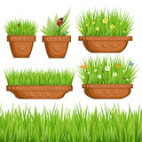 Grönt gräs i krukor Arkivfoto