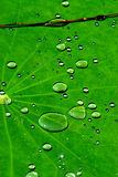 grönt vatten Royaltyfri Fotografi