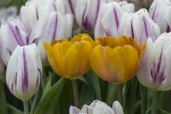 Groß für Frühling Stockfotografie