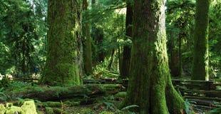 Großartige alte Bäume Lizenzfreie Stockfotos